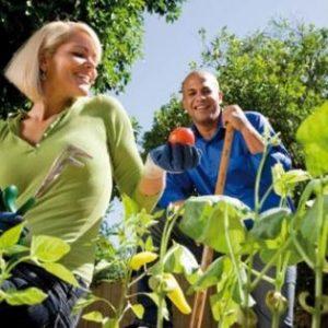 Bahçe Aktiviteleri