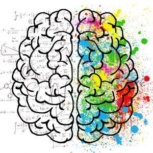 Beyin ağı organizasyona beslenmenin etkisi