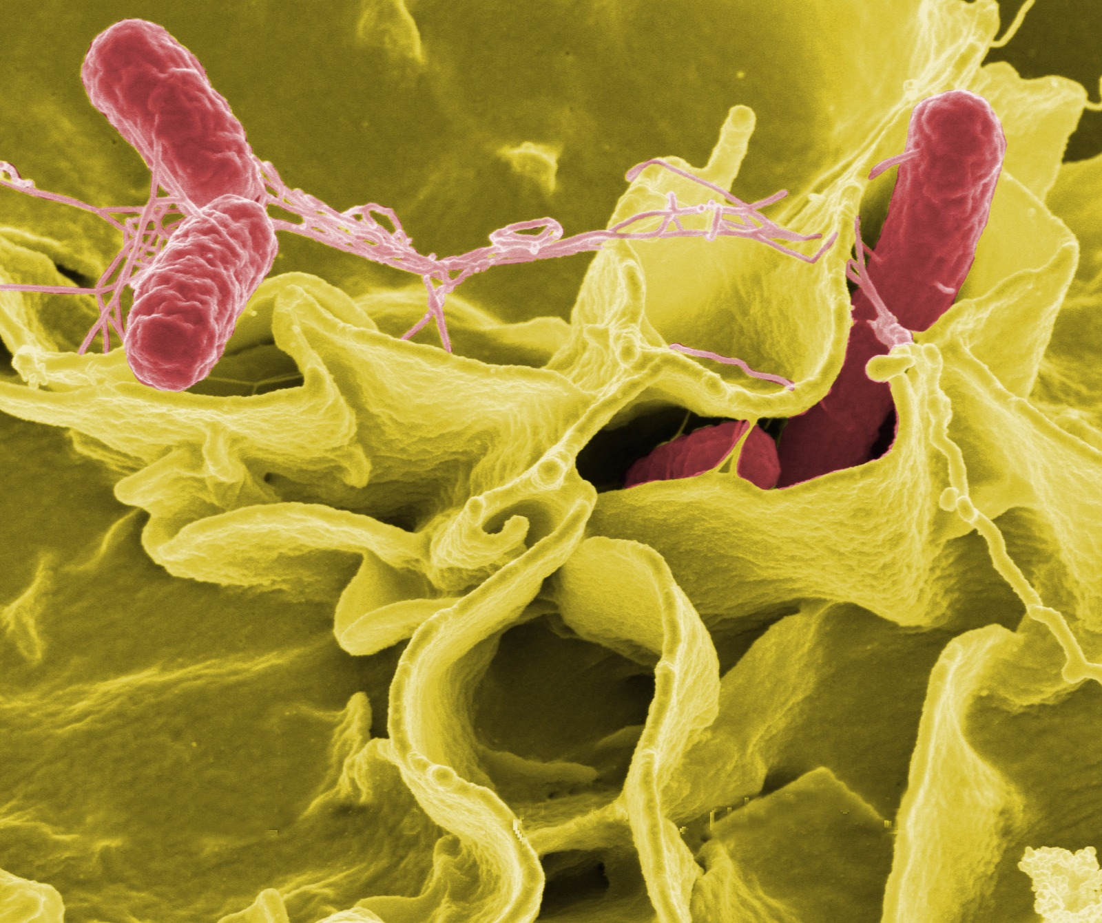 probiyotiklerin faydaları